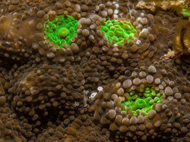 close up of coral polyps