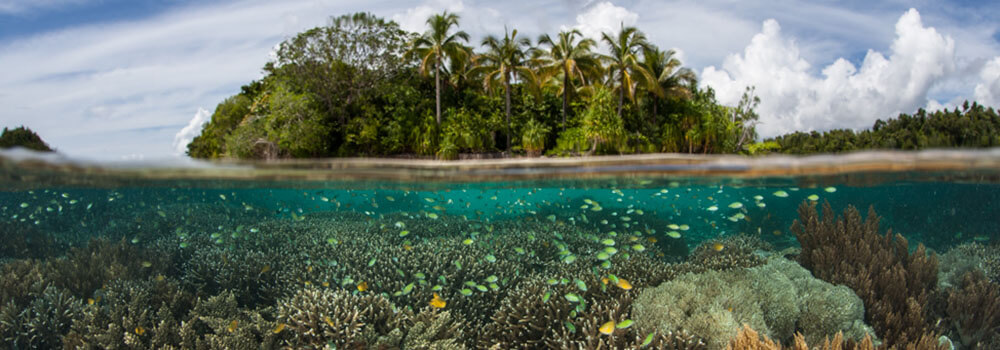 A beautiful reef scene in the Solomon Islands