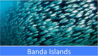 Banda Islands snorkeling tour