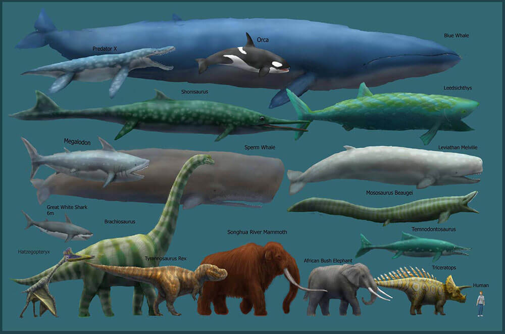 Largest animals in the world chart