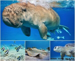 Snorkel around the world photo collage