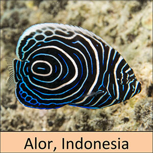 Alor, Indonesia snorkeling tour