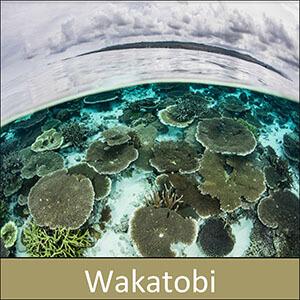 wakatobi tour program with coral triangle adventures