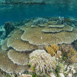 Raja Ampat, Indonesia possesses some of the richest reefs in the world