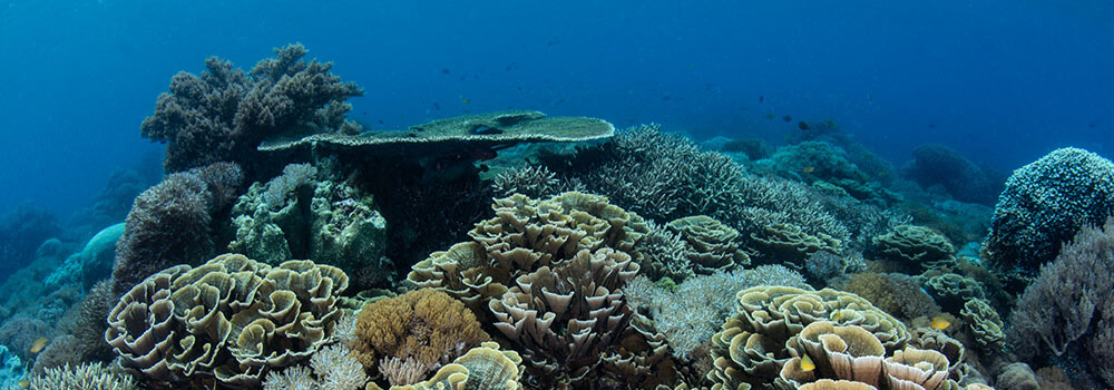 Fantastic reefs abound in Komodo National Park - Coral Triangle Adventures