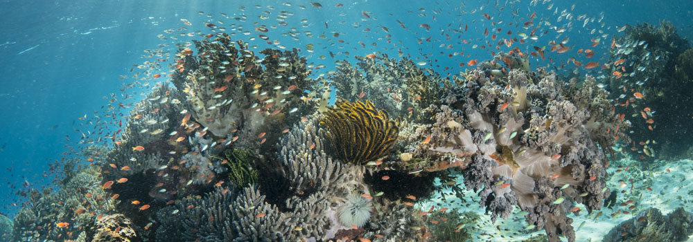 typlical reef scene in Alor Indonesia