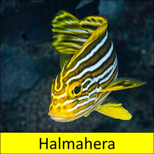 tour icon for the coral triangle adventures snorkeling tour to halmahera