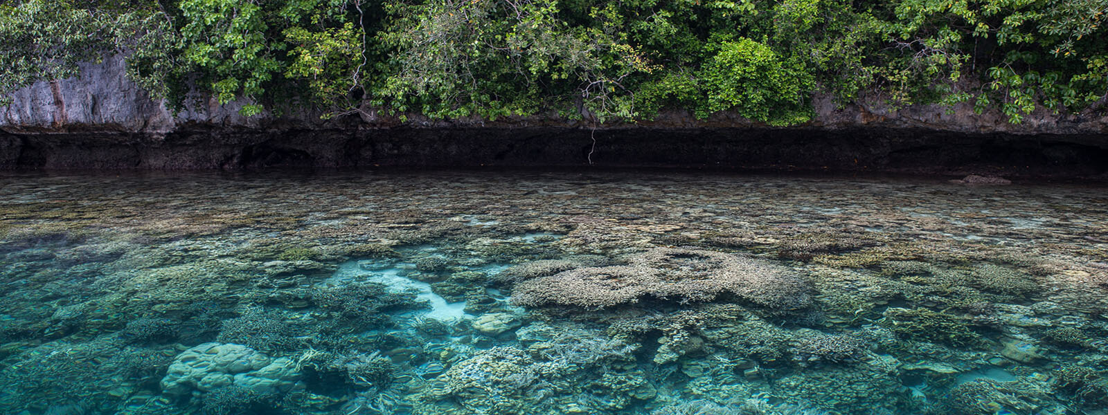 Snorkeling the shallow reefs in Palau's Rock Islands